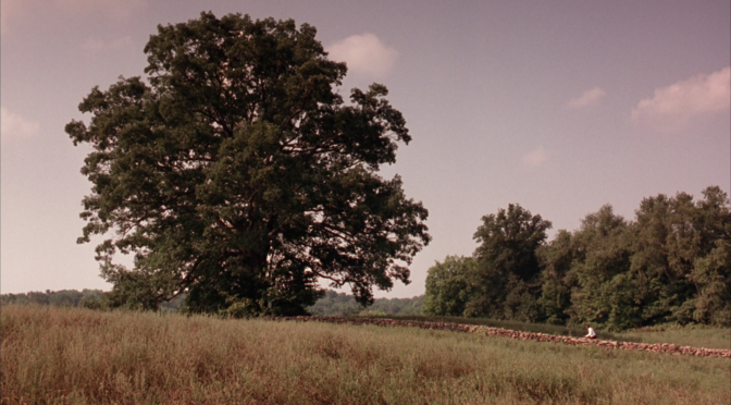 five movies the_shawshank_redemption_tree
